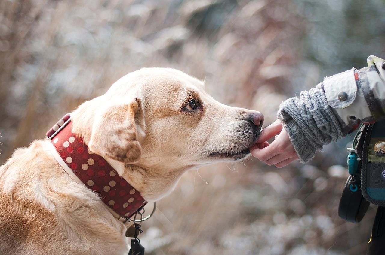 il linguaggio del tuo cane