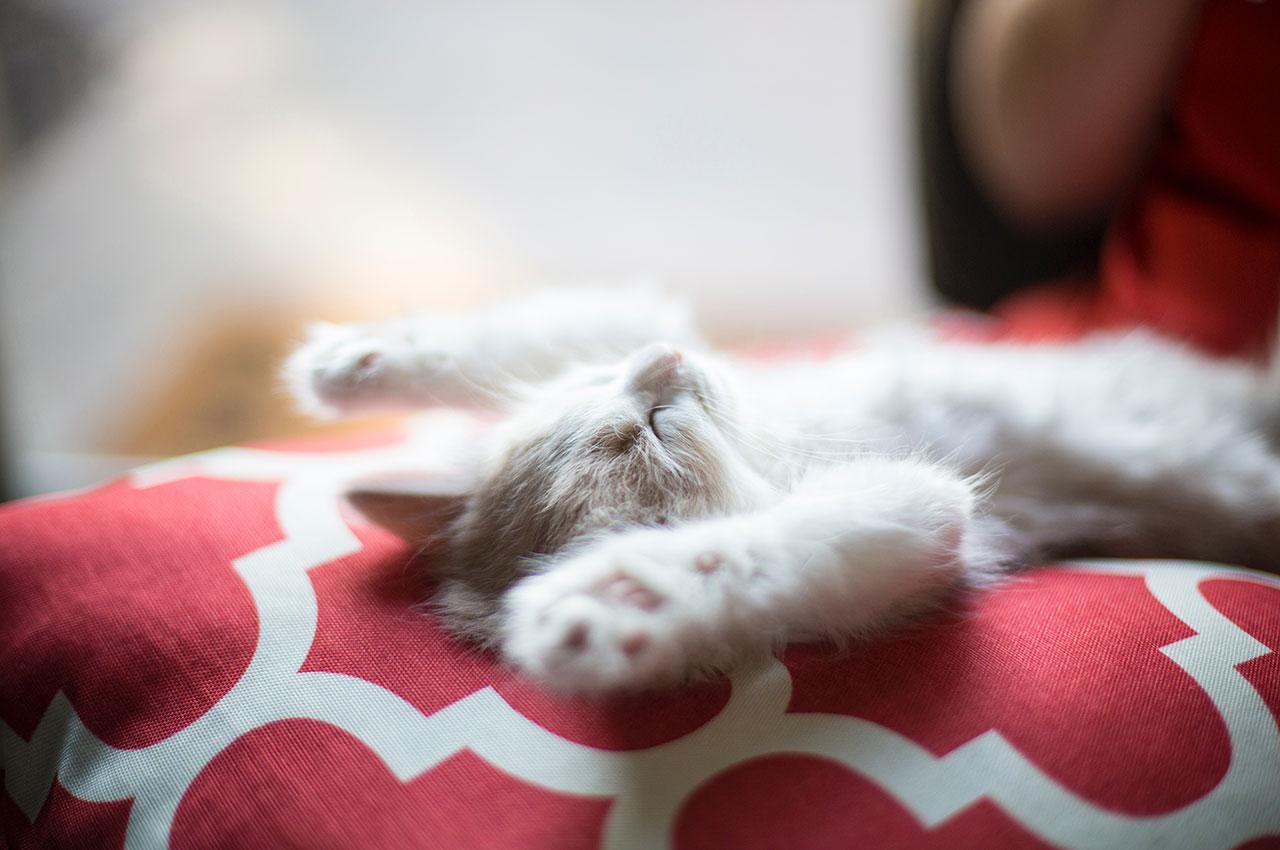 curiosità sulla pancia del tuo gatto
