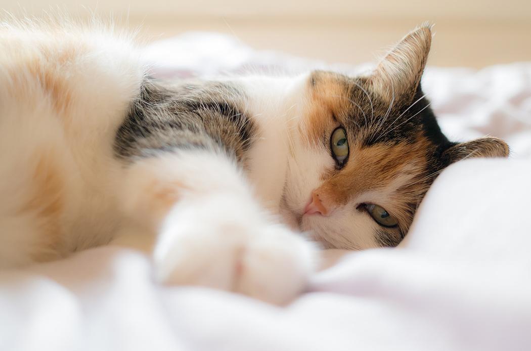 Lettiera per il tuo gatto