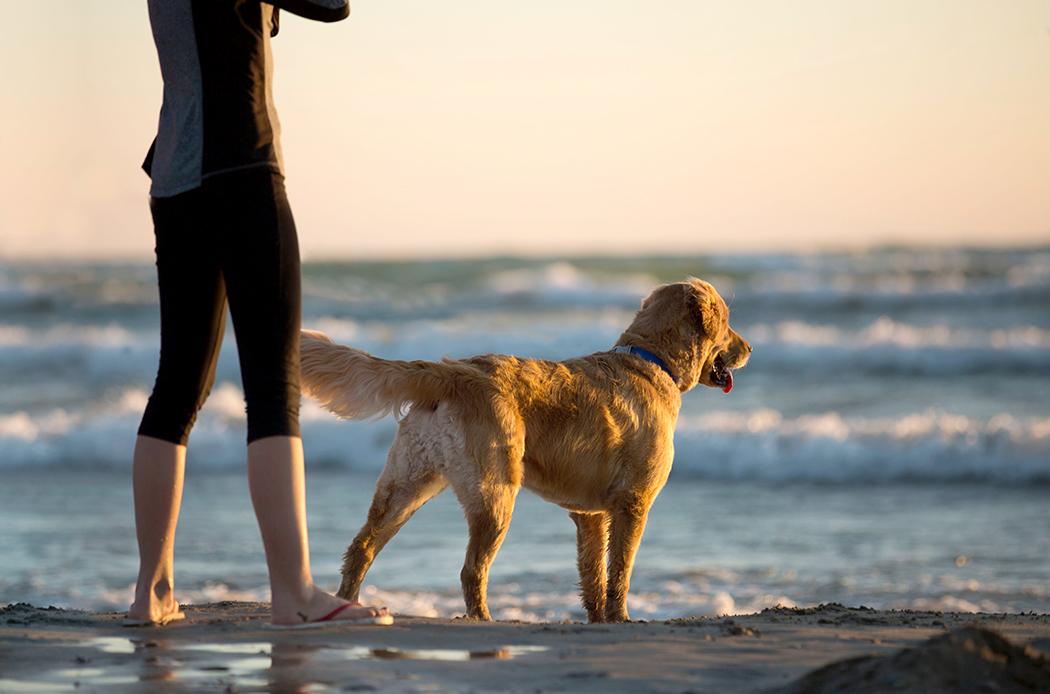 portare il proprio cane in spiaggia