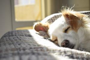 proteggere-i-cani-in-inverno-alimentazione