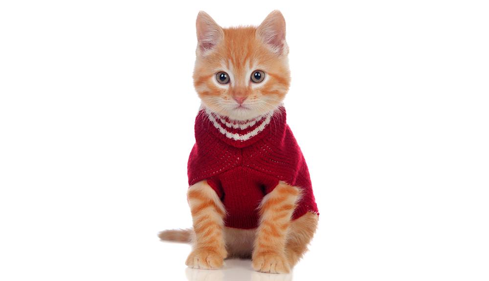 giusto vestitino per il tuo cane e il tuo gatto