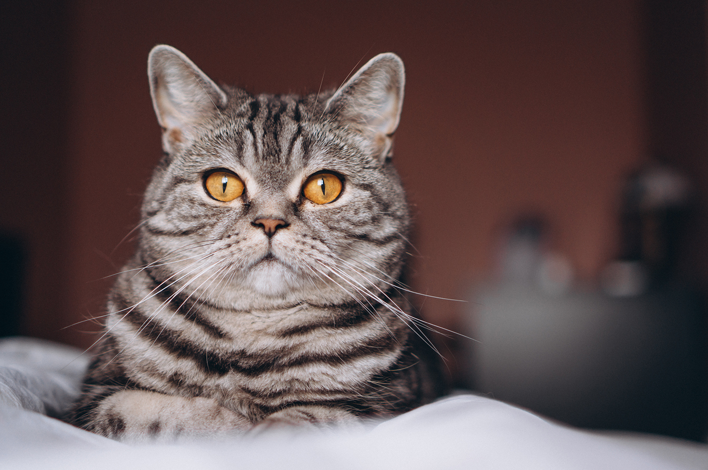 Curiosità feline