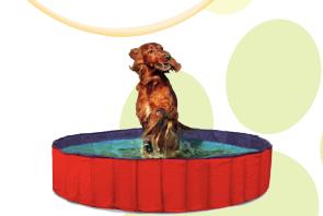piscine cani e gatto