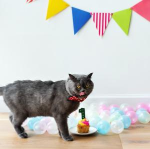 convertire età del gatto
