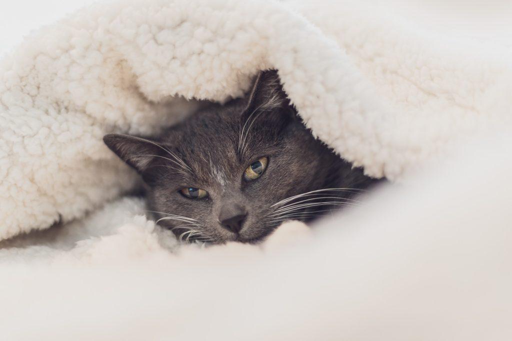 proteggere animali dal freddo-gatto