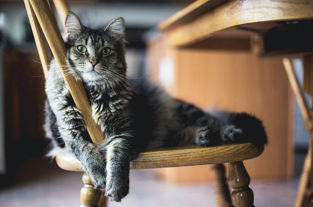 lezioni-di-vita-feline