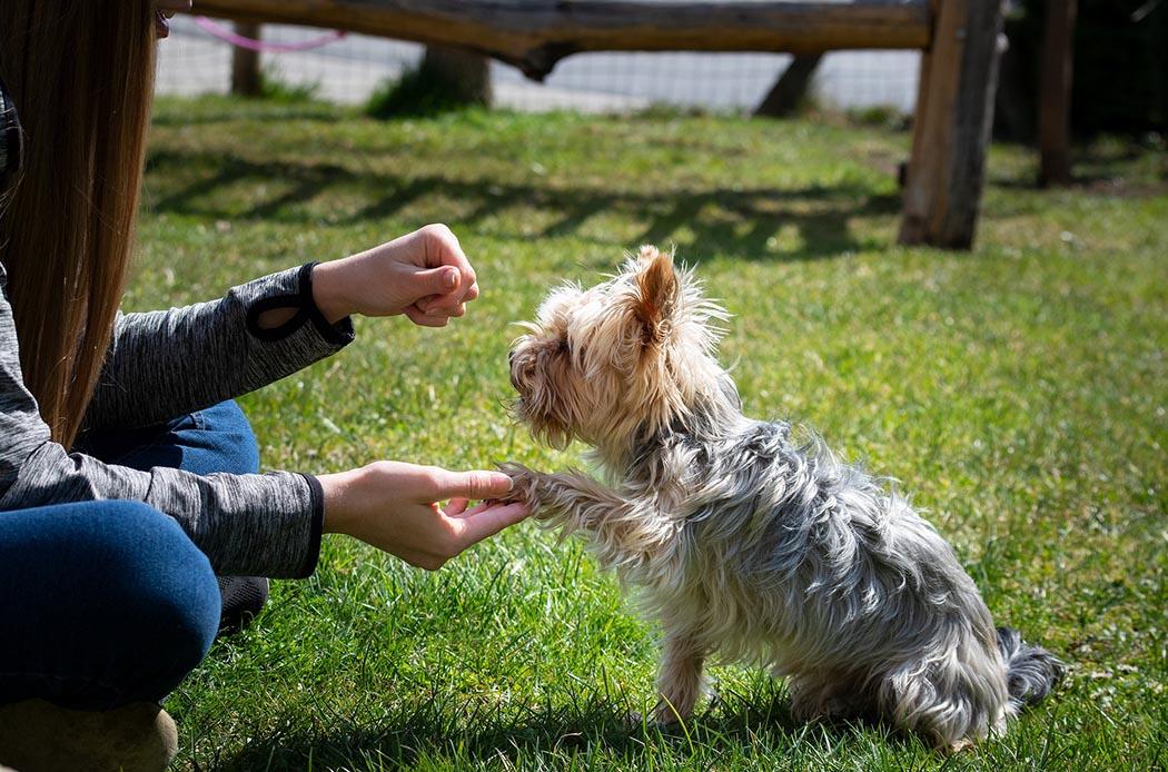 L'importanza dell'addestramento nei cani