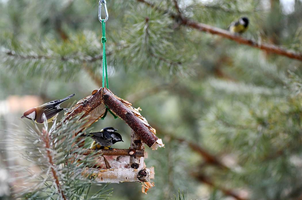 uccelli selvatici in inverno
