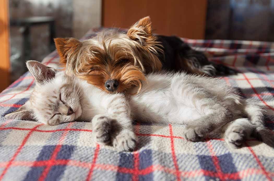 dermatite in cani e gatti